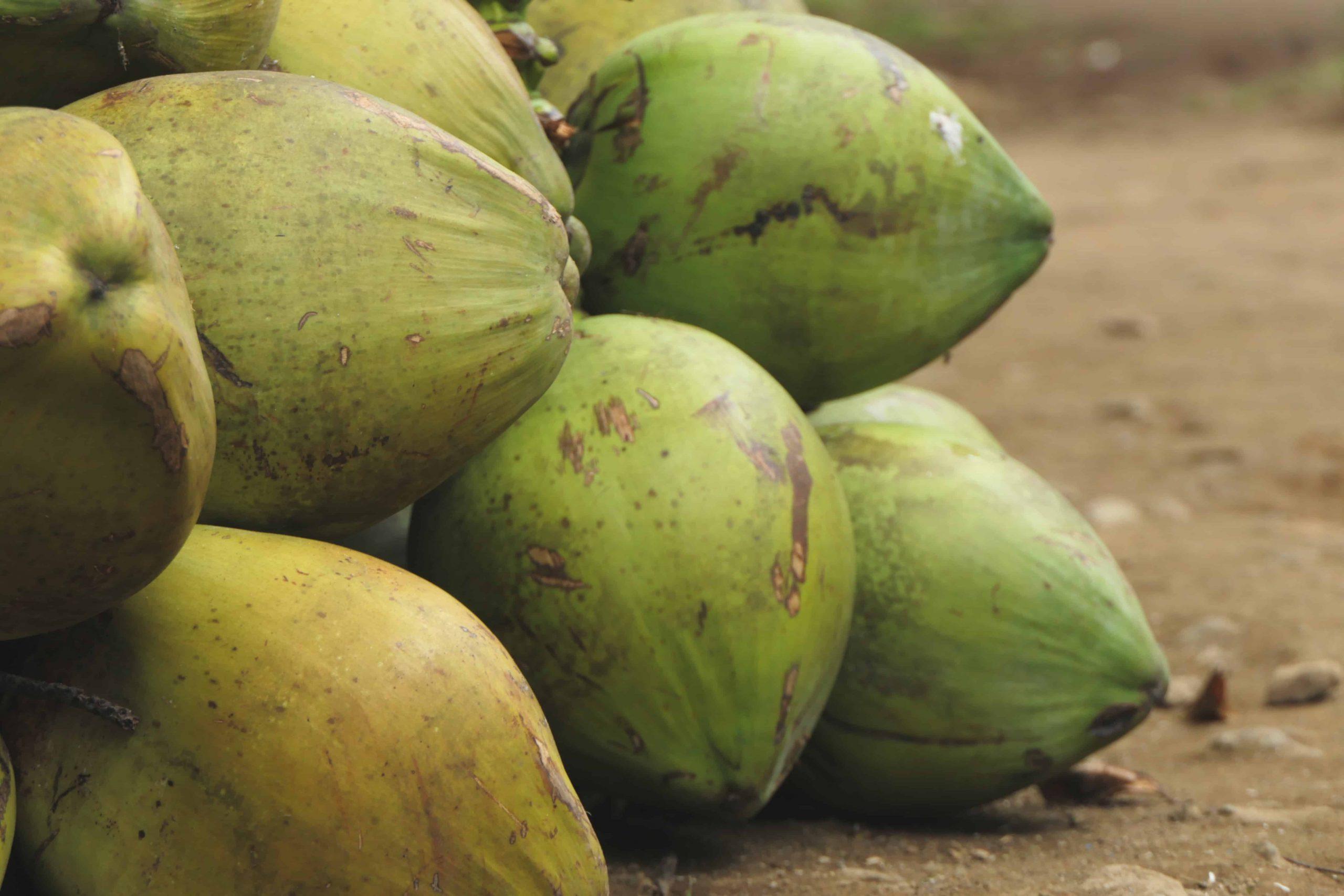 Kokoskohle: Test & Empfehlungen (04/21)
